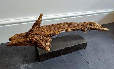 Driftwood Shark